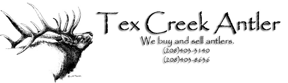 Tex Creek Antler
